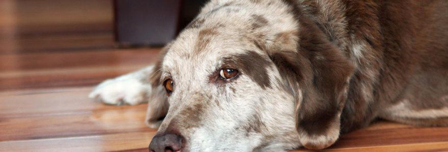 tumeur chez un chien